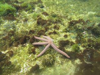 Snorkel na Ilha Grande