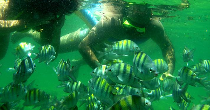 Snorkel Na Ilha Grande Angra Dos Reis Rj Brasil