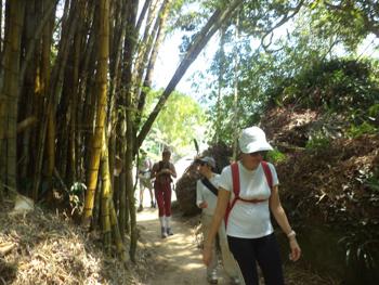 T11 – Caminho da Aroeira - Ilha Grande - RJ