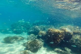 Praia da Cachoeira - Peixes, corais e tartarugas sempre presentes