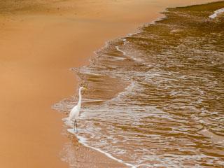 A praia é semi-deserta e muito tranquila
