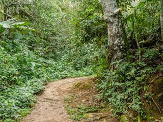 Início da trilha para a Praia Vermelha - Ilha Grande