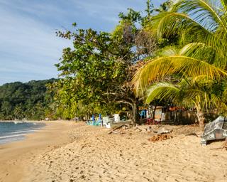 Árvores e palmeiras ornamentam a orla da Praia Grande de Palmas